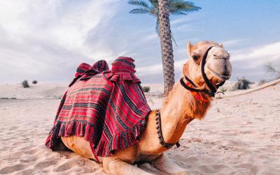 Dubai Desert Adventures