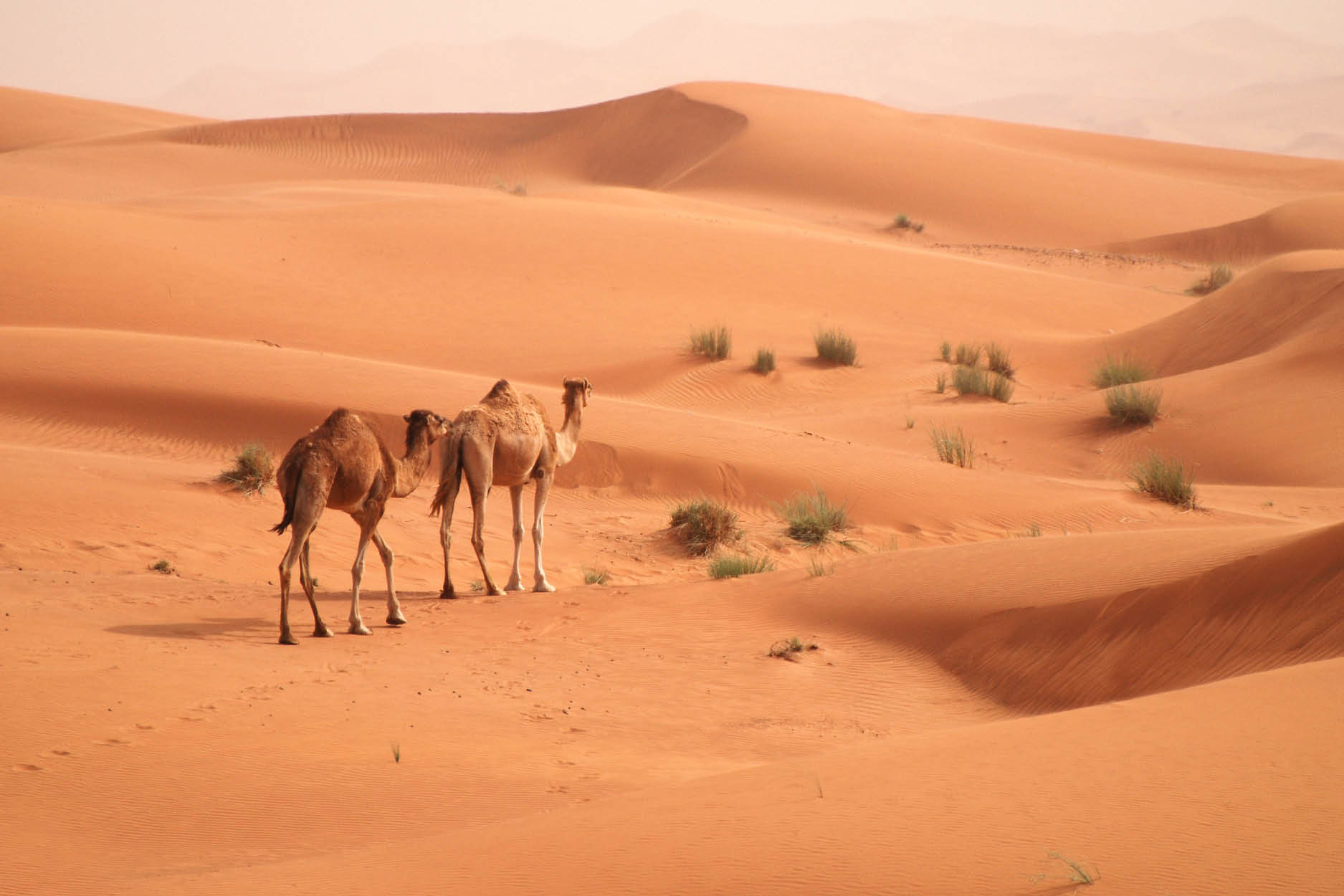 Desert Safaris In Dubai See More Of The City With My Dubai